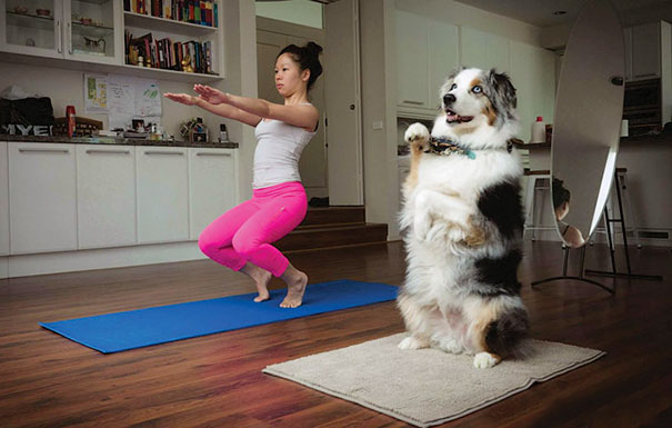 Funny Cute Yoga Photography Animal Asan Pets