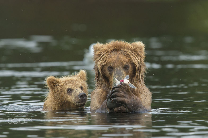animal, baby animals, bear, bear cub, photography, cute animals, adorable, beautiful, funny, awesome