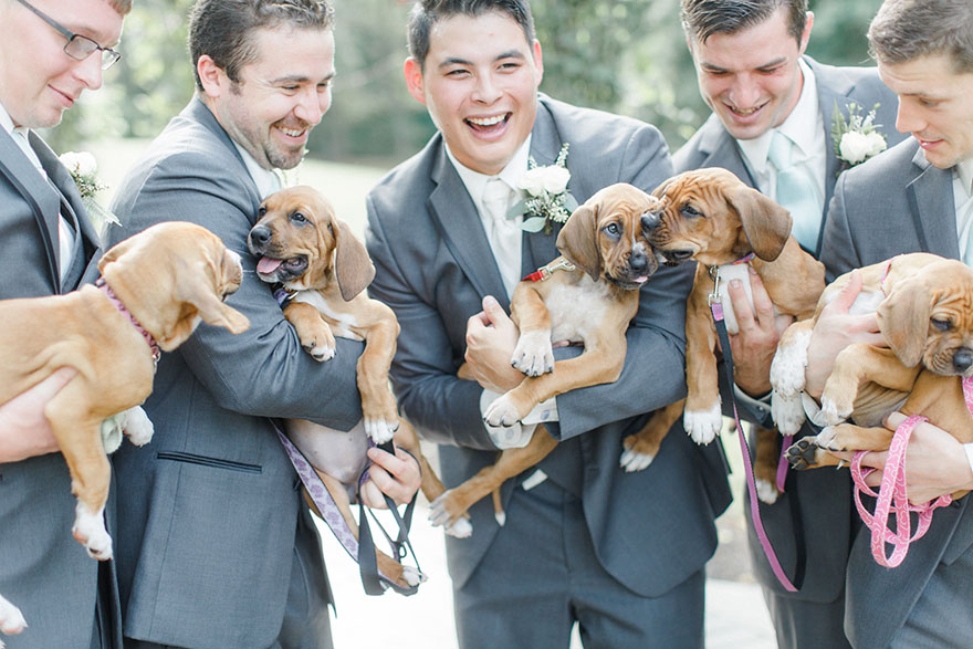 photography, rescued dogs, wedding photoshoots with animals, animals, dogs, cute, sweet, adorable