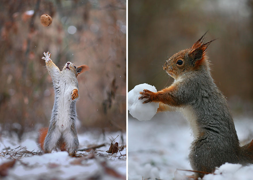 squirrel, photography, russia, vadim trunov, cute, funny, adorable, beautiful, amazing, animal