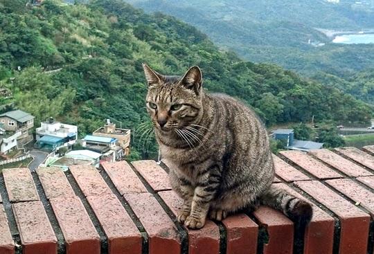 cat village taiwan, cat village japan, london cat village, taipei city, houtong, cat village, taiwan, travel tips, asia