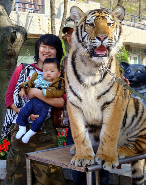 15 Photos Will Show You WTF Weird Facts of China | Reckon Talk