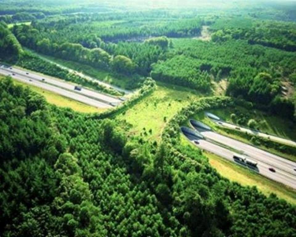 bridges, geography, animal crossings, netherlands bridges, netherlands, tunnels, wildlife, bridge for animals, amazing, interesting, europe, highway bridge