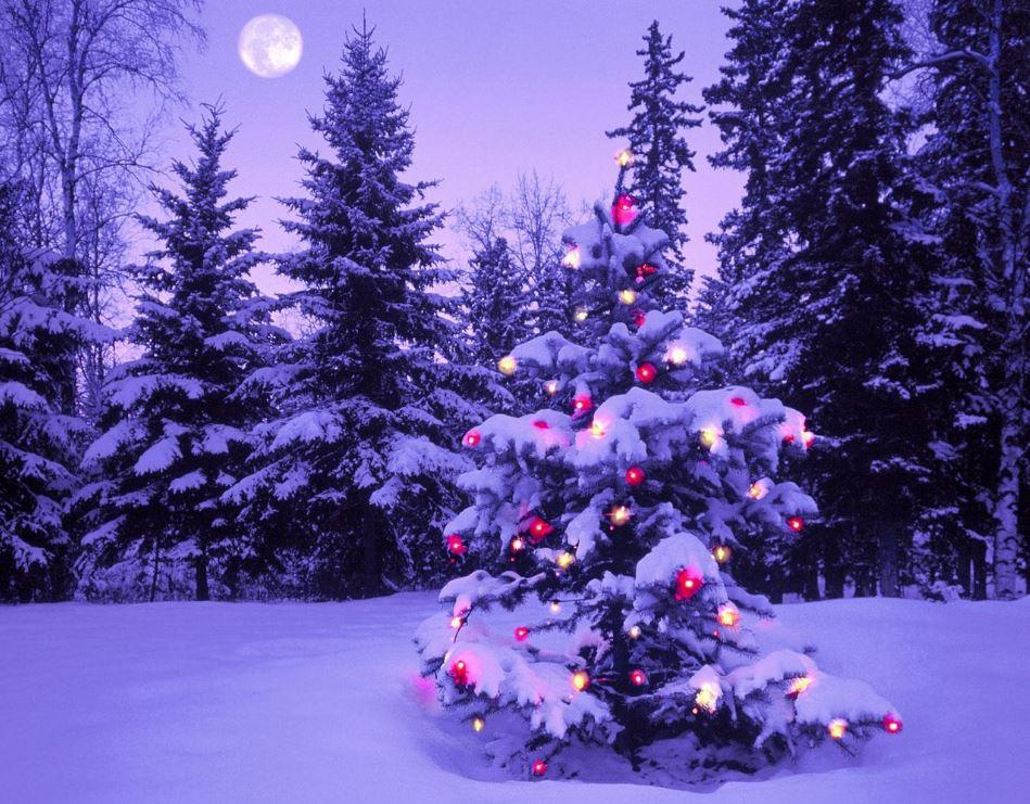 xmas ,xmas facts, christmas, christmas facts, merry xmas,merry christmas, merry xmas facts,xmas carol,