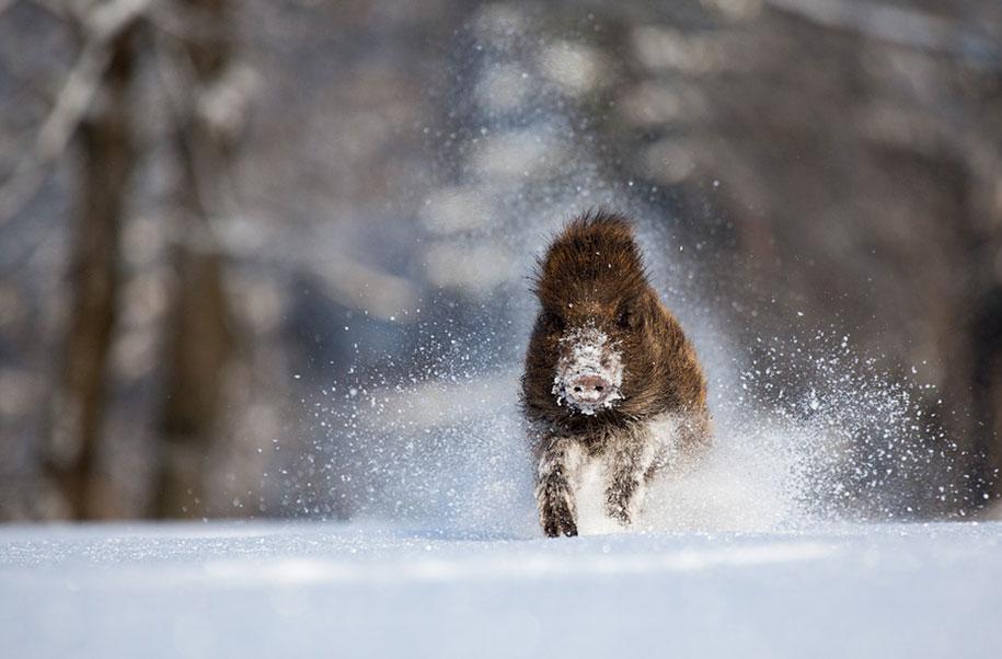winter, winter animals pictures, animal snow, cute, photography, winter photography, animal photography, wild animals