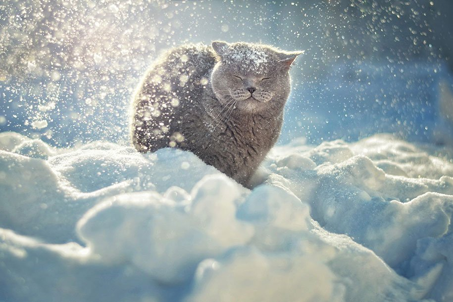 winter, winter animals pictures, animal snow, cute, photography, winter photography, animal photography, wild animals