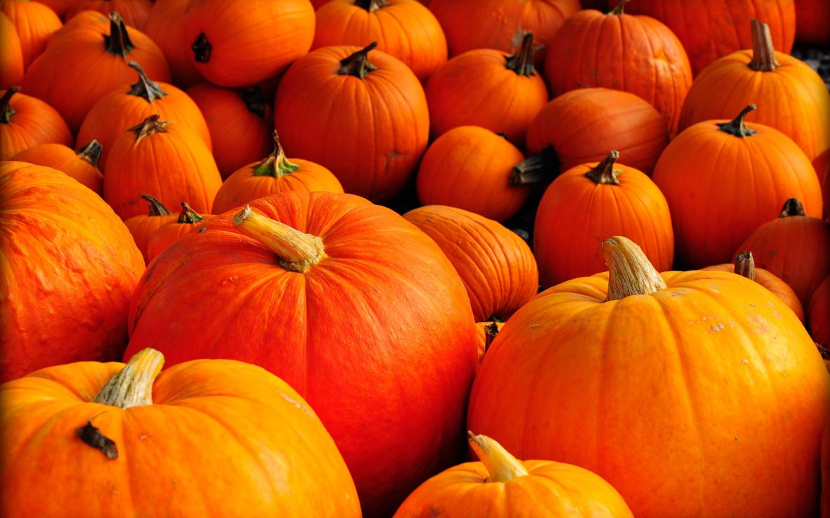 kaddu, pumpkin, kaddu benefits, pumpkin benefits, pumpkin health benefits, kaddu ke fayde