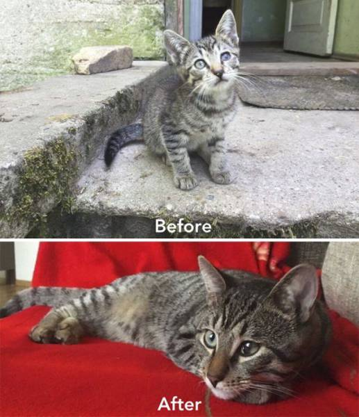 cat care community, zanda indriksone, latvia, europe, cat rescue, animal escue, before 7 after, kittens, before & after cat rescue, inspirational
