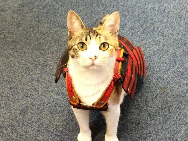 japan, japanese, asia, samurai armor, samurai armor for cats dog, animal fashion, samurai armor costume, samurai armor facts