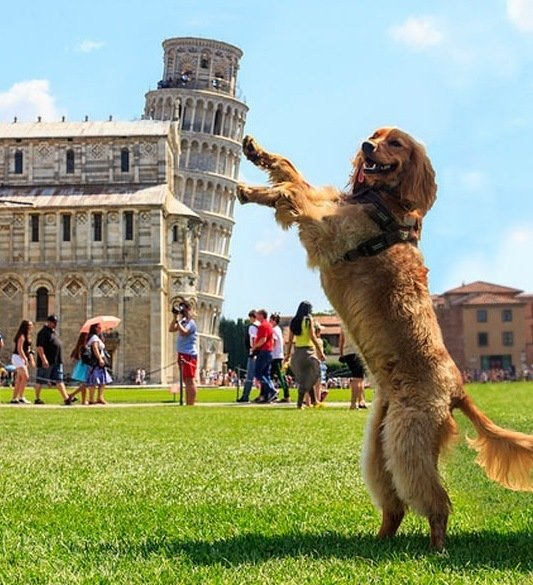 EUROPE, ITALY, LEAN TOWER OF PISA, MONUMENTS, PISA dog