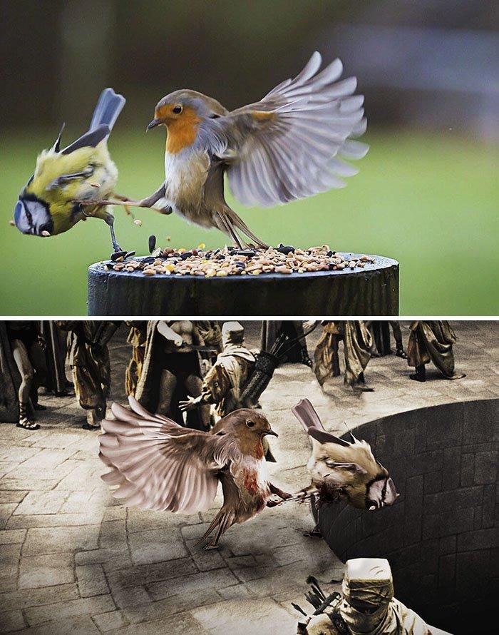 funny, cool, photo, photoshop, photoshop battles, animals, funny animals, viral, photobomb