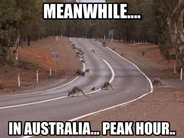 funny, lol, australia, crazy, meanwhile in australia, weird australian, only in australia, memes australia, culture, stupid australia, australia road