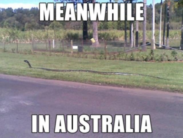 funny, lol, australia, crazy, meanwhile in australia, weird australian, only in australia, memes australia, culture, stupid australia, australia snake