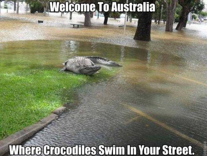 funny, lol, australia, crazy, meanwhile in australia, weird australian, only in australia, memes australia, culture, stupid australia, facts australia