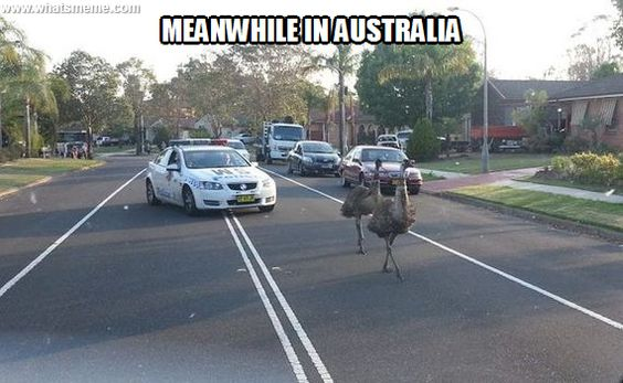 funny, lol, australia, crazy, meanwhile in australia, weird australian, only in australia, memes australia, culture, stupid australia, facts australia, drive in australia